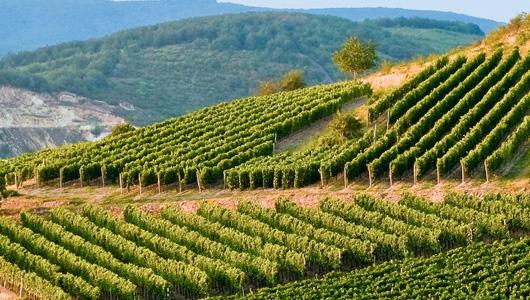 Regiony winiarskie Węgier | Winnica profesora