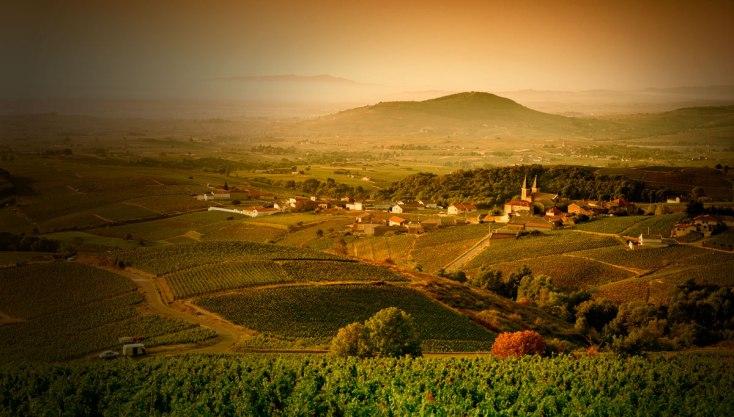 Winnice regionu Maconnais