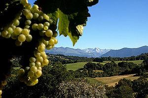 Jurancon winnice