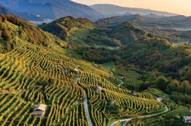 Prosecco winnice